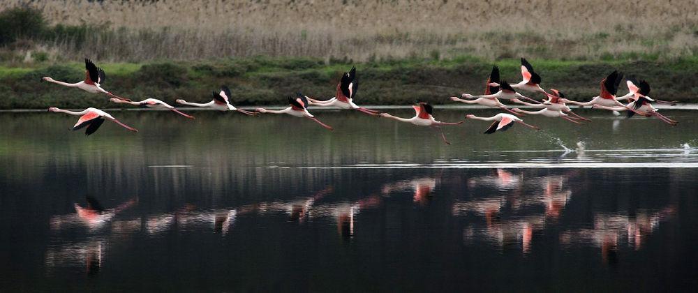 Flamingo!!! by Nunzio Garanti