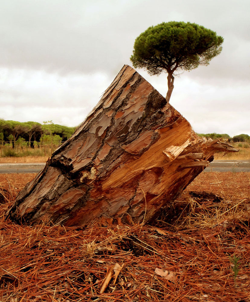 32 by Nunzio Garanti