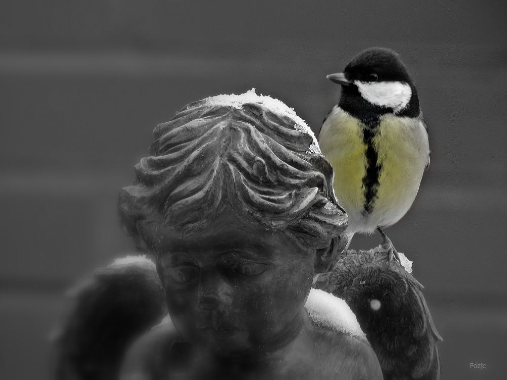 Great Tit / Koolmees on the shoulder of an Angel by Suus Lutz