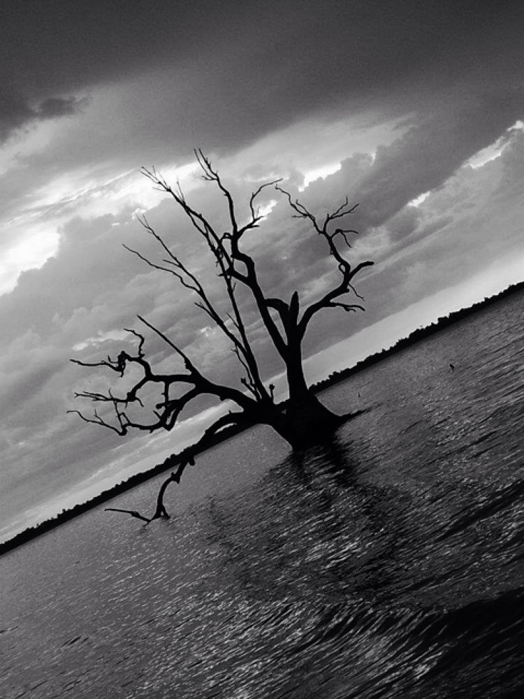 Barmera Lake Bonney  by janetbeckerphotography