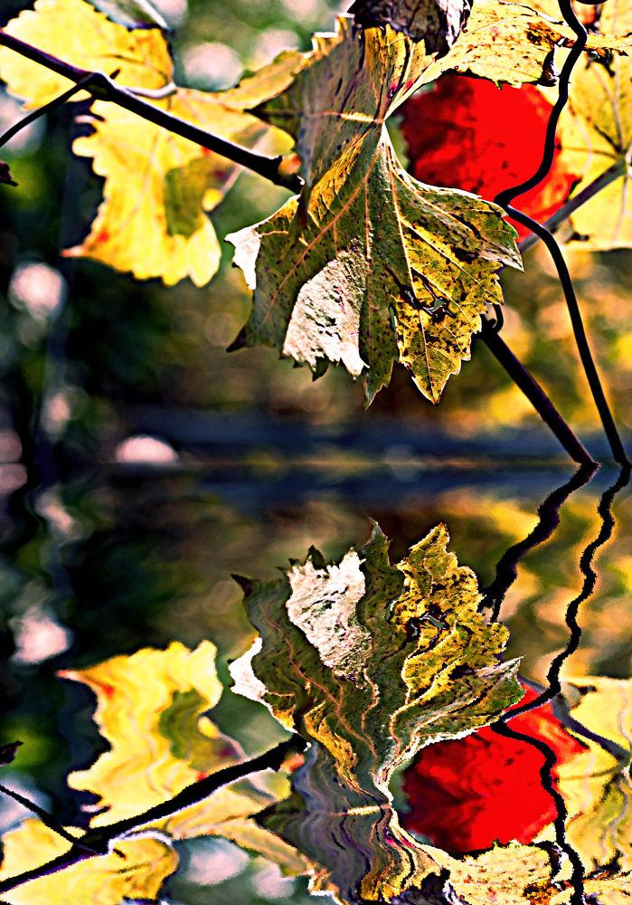 autunno by M.Vizzani