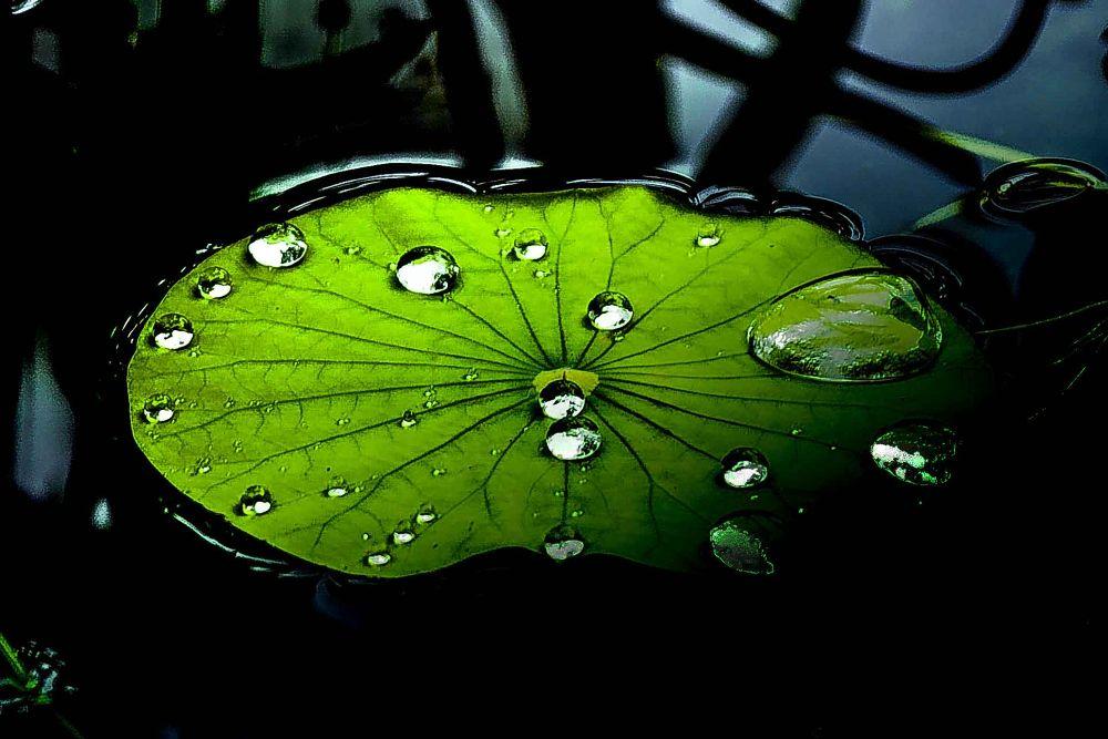 scrolling dew by Ronny Chiu