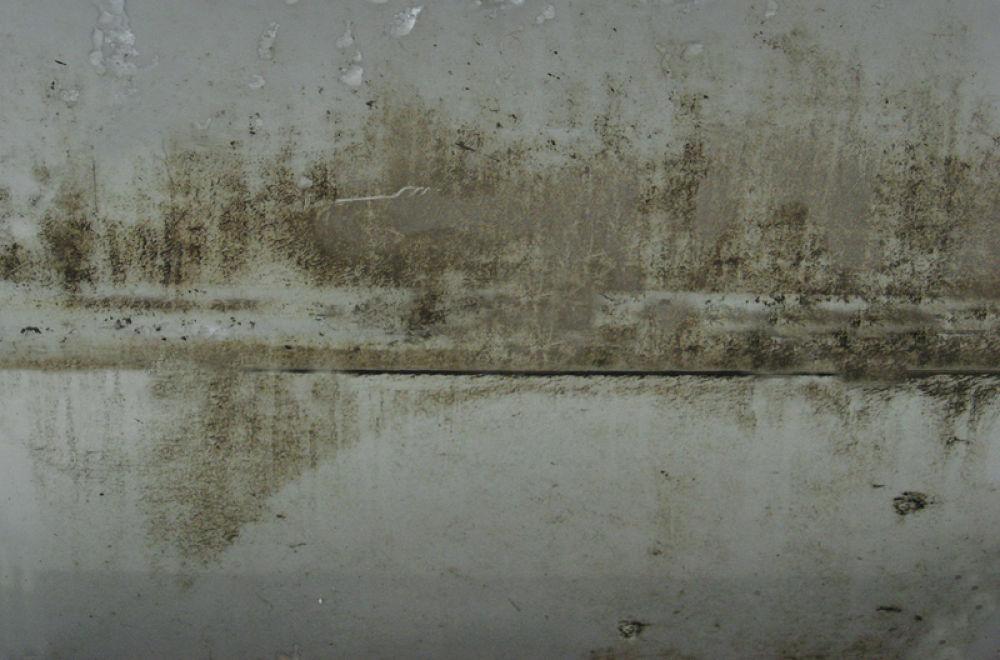 Осинник у озера by tarutinaolga2012
