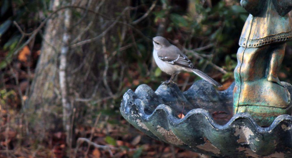 Mocking Bird by Linda L. Offen