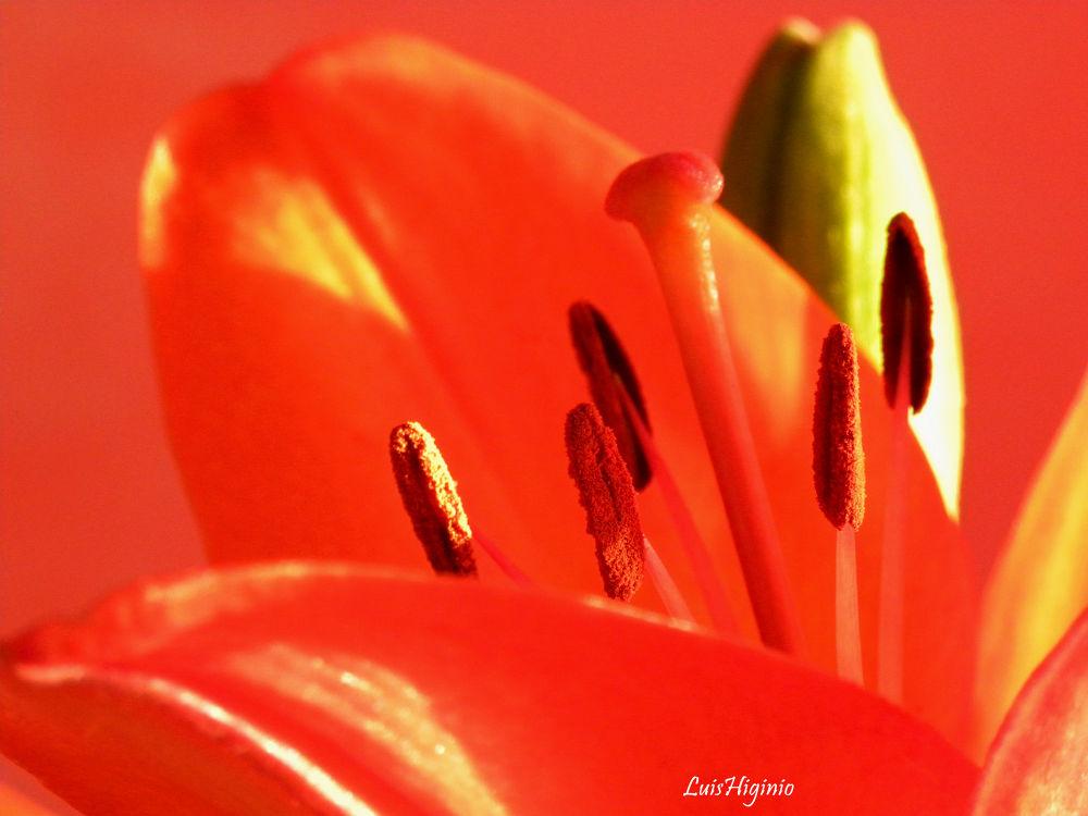 DSCN0591 - copia Flowers beauties of nature. by Luis Higinio Hernandez Pablo