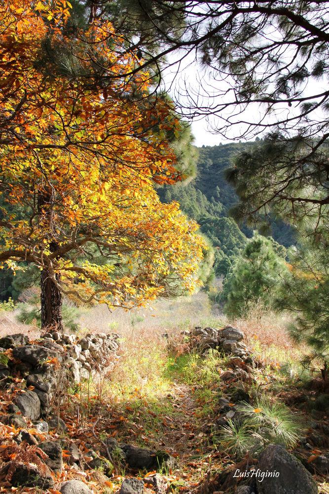 IMG_3570 - copia Autumn colors. by Luis Higinio Hernandez Pablo