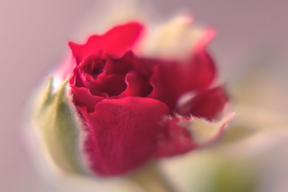 Unfolding Beauty by Angie M