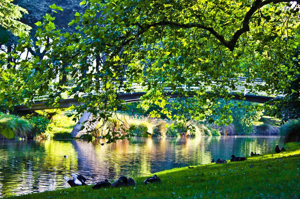 Hagley Park, Christchurch, New Zealand by Phoenix Nicolson