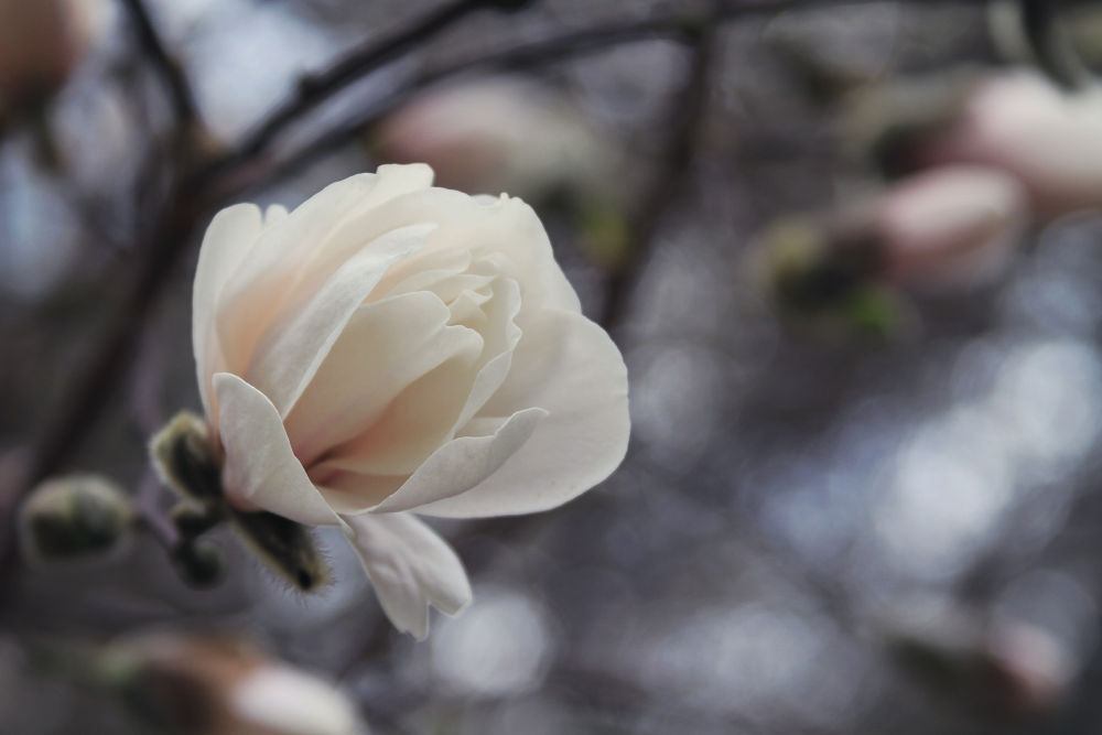 Spring Blossoms!! by dianeholmanphotography