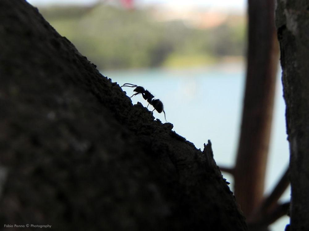 The difficult walks Ant by Fábio Penna