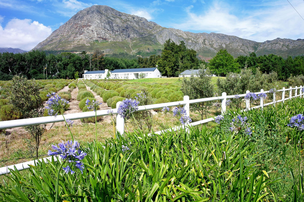 Franschhoek, SA by fiftythreenorth