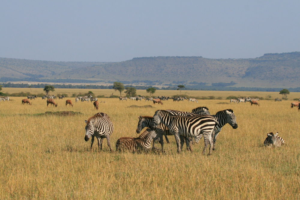 Masai Mara by DarrenWood