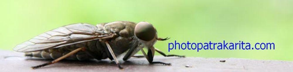 Bee by photopatrakarita