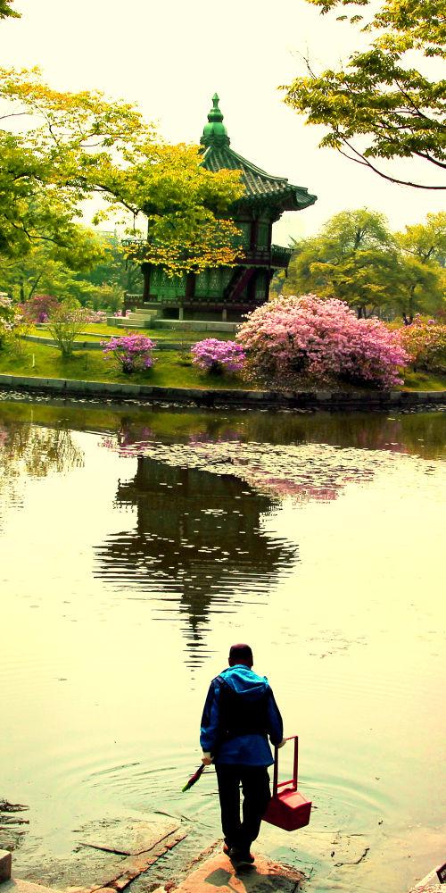 springtime by Phan Tuan