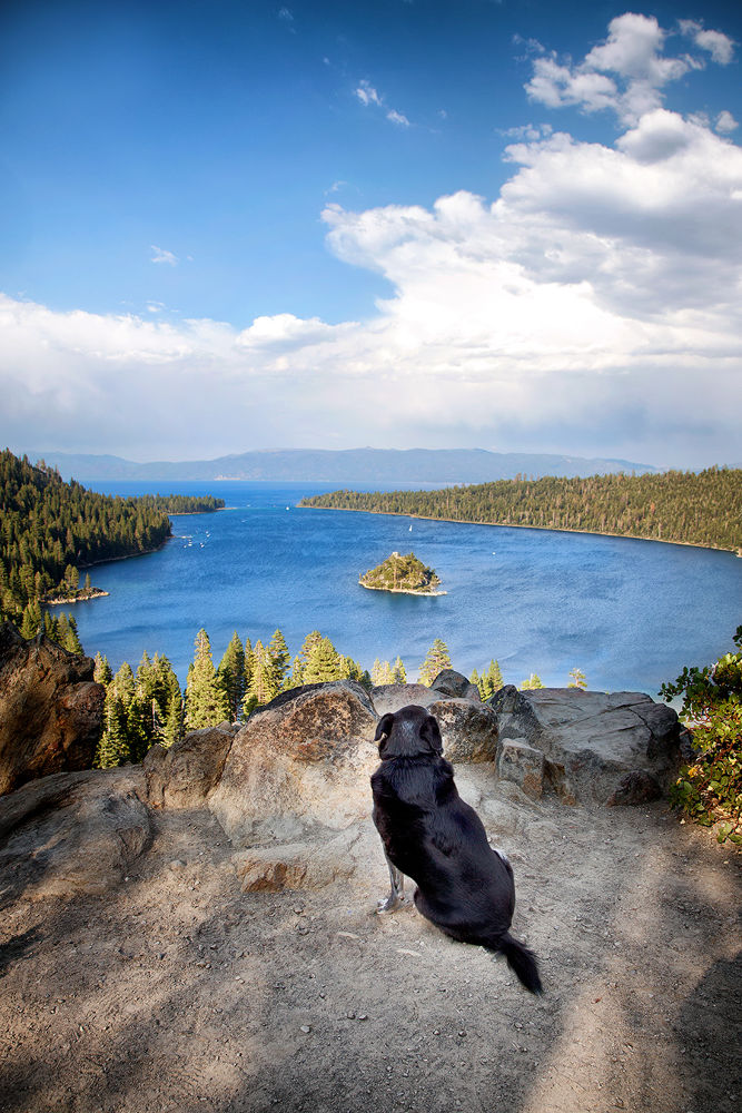 Obie T. Dogg views Emerald Bay, Lake Tahoe by Karen Schmautz