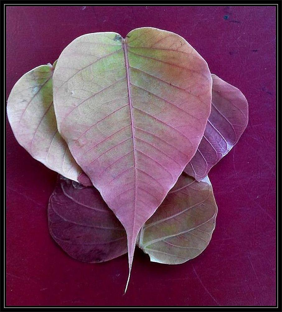 Creativity of leaves  by Vivek Tavate