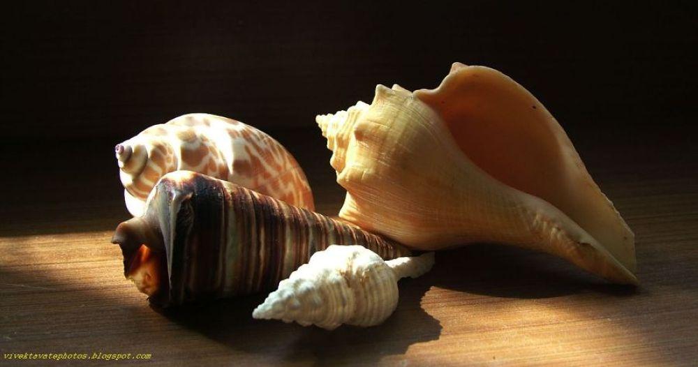 Shells  by Vivek Tavate