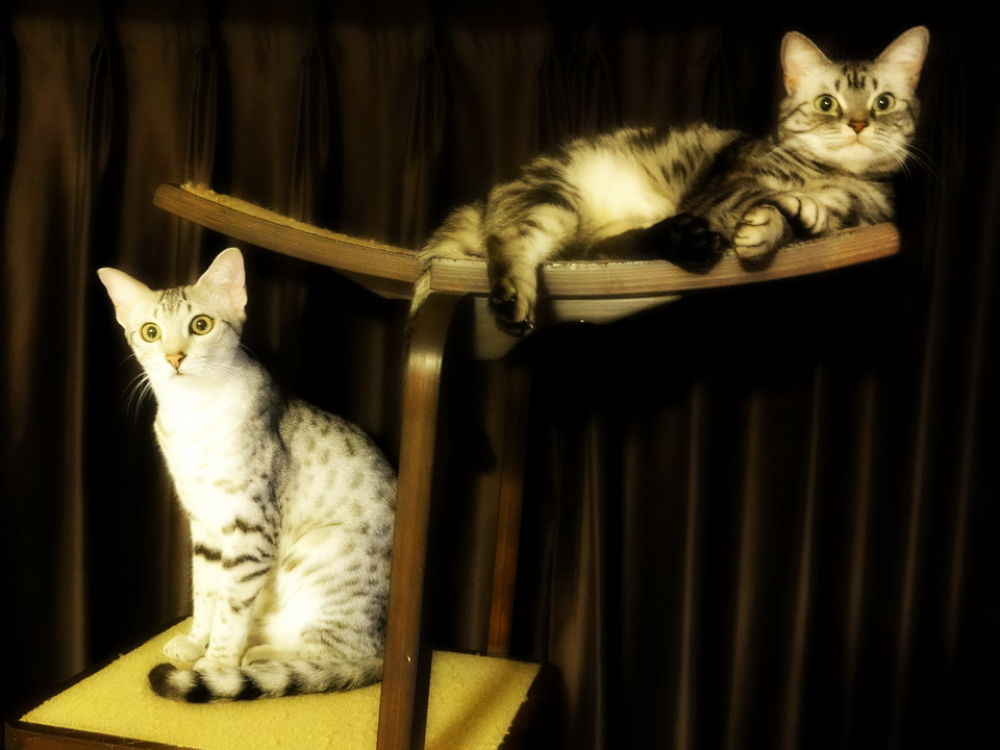 On the tower: Maui (left) and Hina (right) by Mona Ohya