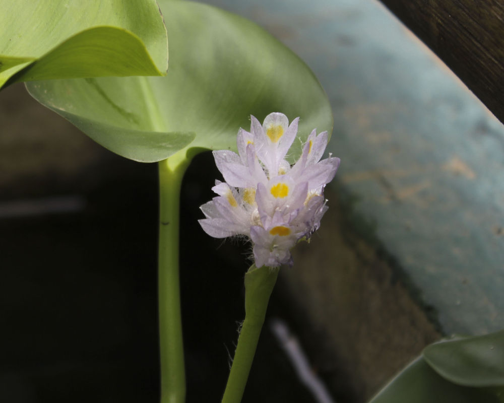 Pequena porem Grande beleza - Small however great beauty! by gkochem