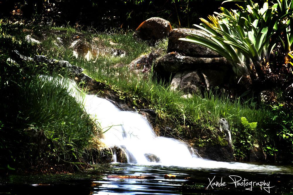 Jardim Botânico.... by Xande Lopes