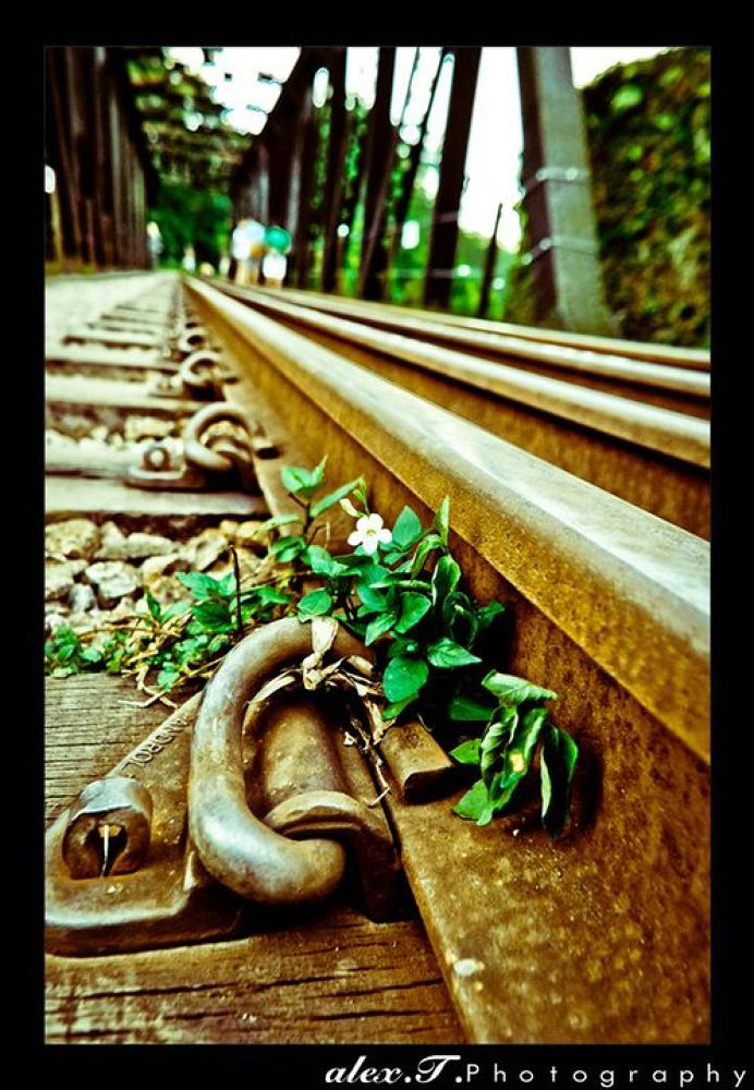 Life among Rust by Alex T Photography