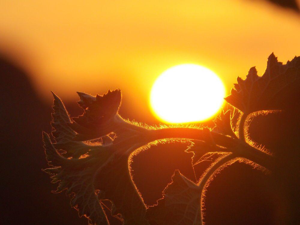 My first sunset  click :) by Hidy