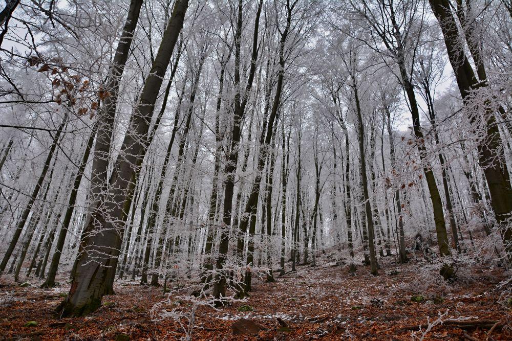 Winter forest by Jožo Kozlok