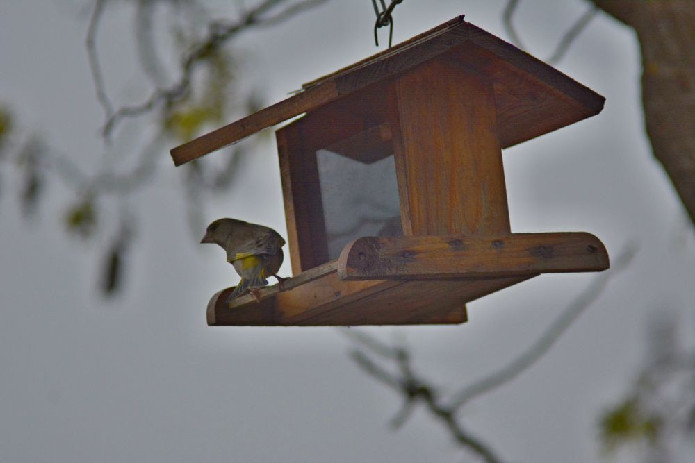 Bird by Jozef Kozlok