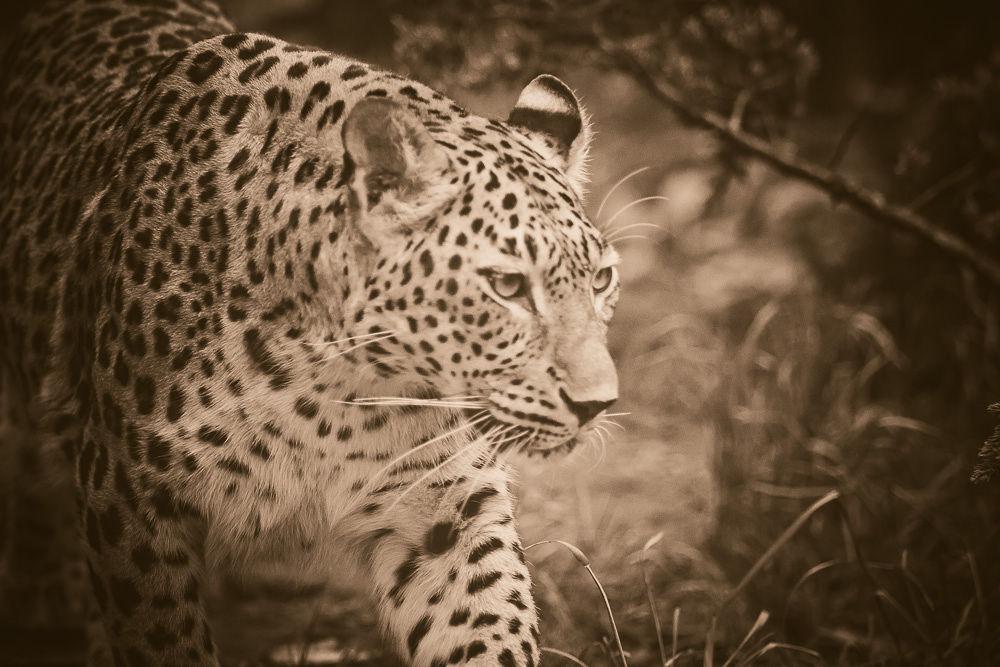 Untitled by KS -Tierfotografie