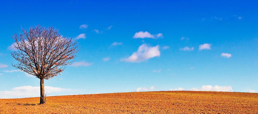 Solitude I by Erwan Grey