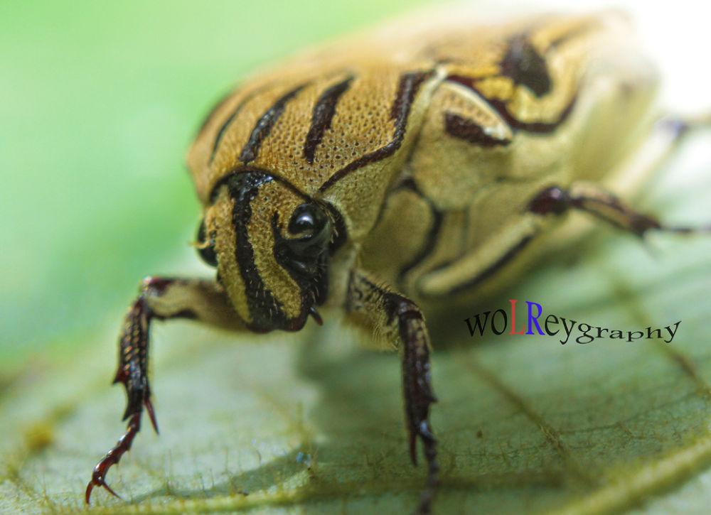 bug by Wolrey