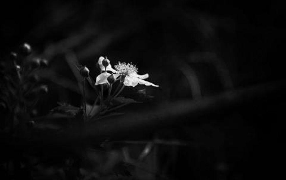 floewe by Mani Sekar