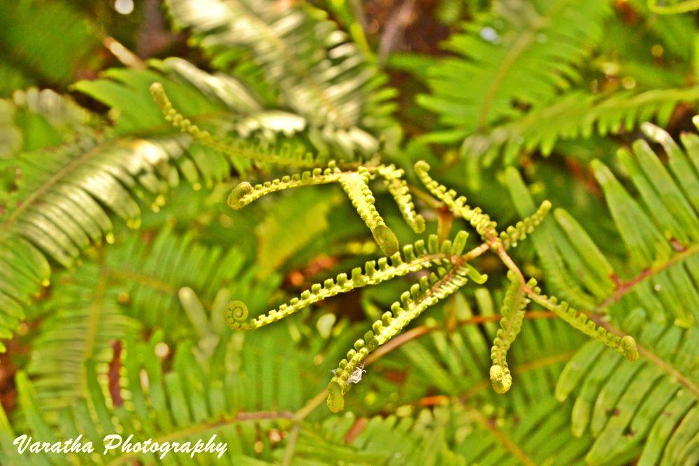 Green by varatha4u