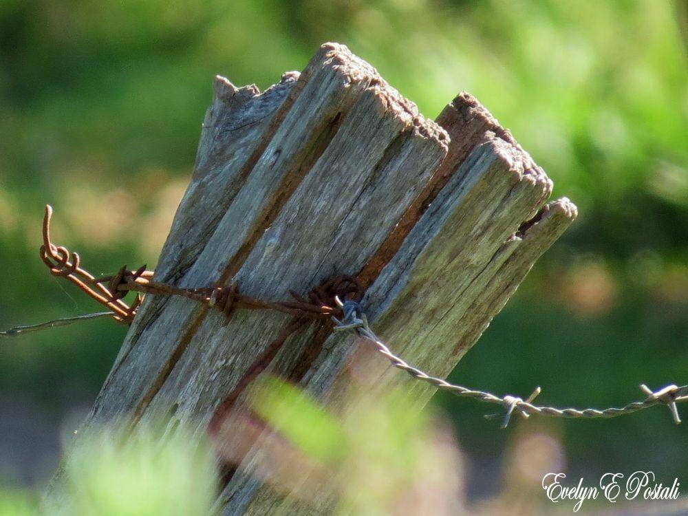 Limites e determinantes by Evelyn Postali