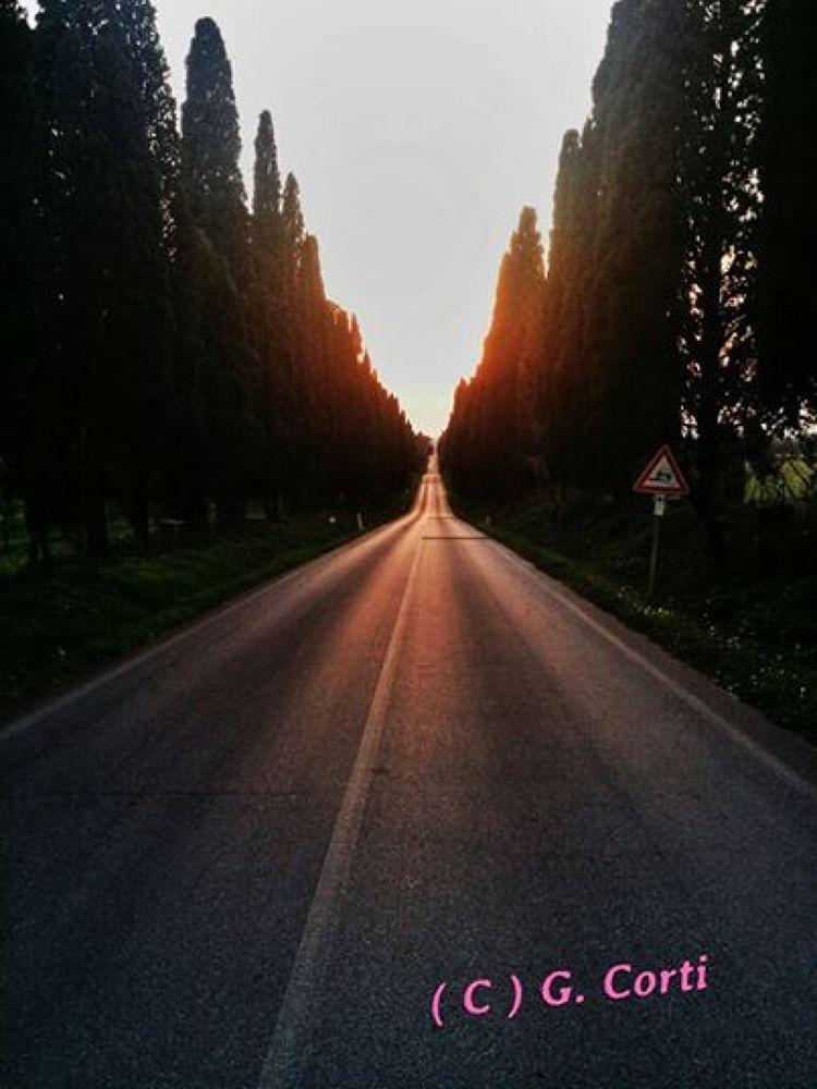 Bolgheri i cipressi by Giuliano Corti
