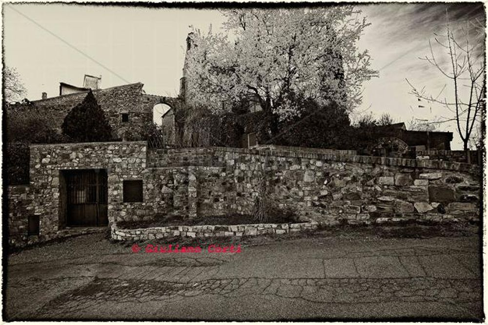 Castello di Tignano-mandorlo-in-fiore-mg-4092 by Giuliano Corti