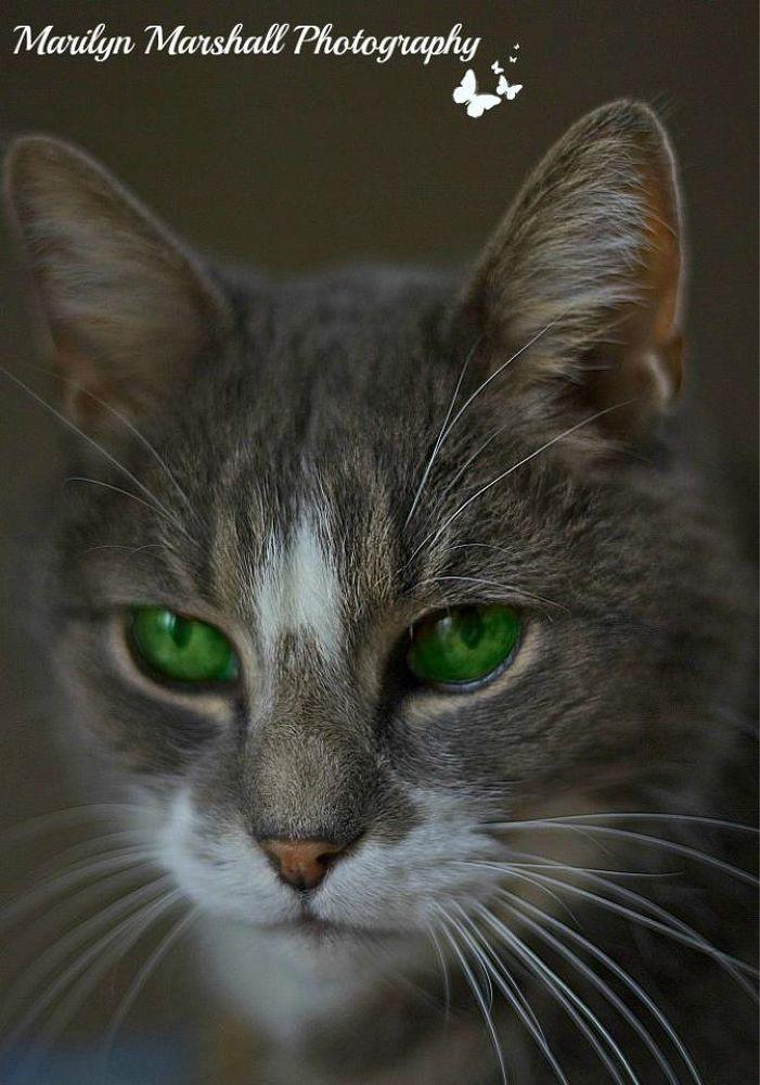 Green Eyes by Marilyn Marshall