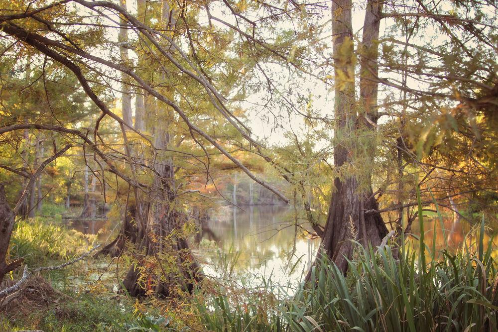 Fall in Louisiana by Palmer House Photography