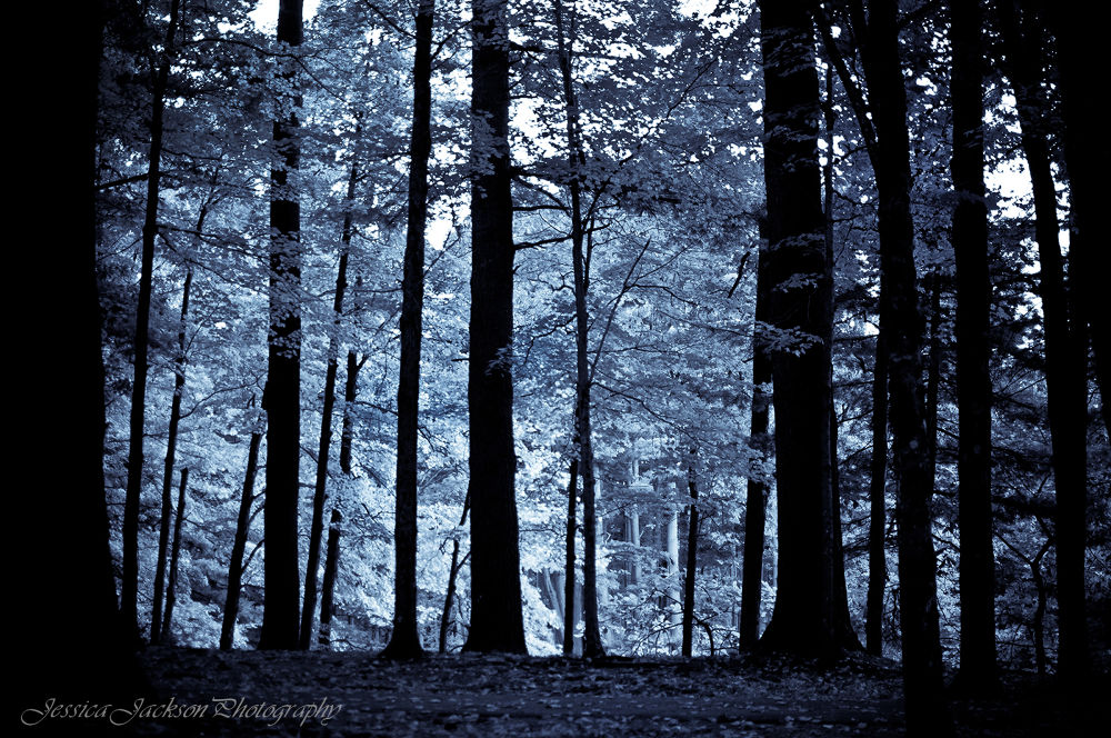 Shadows in the park by JessicajacksonphotographyMA