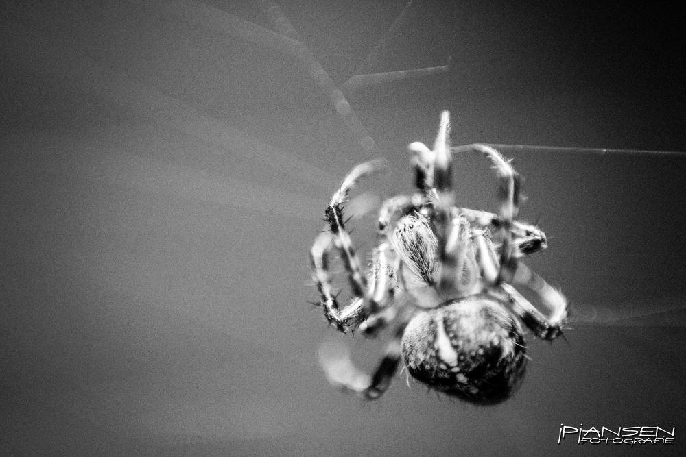 SPIDER by Jan Peter Jansen