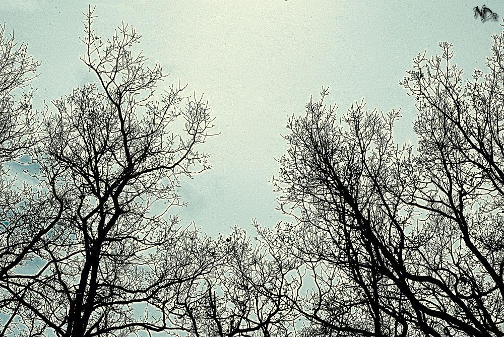 La Magia della natura by Nicola D'Ecclesiis