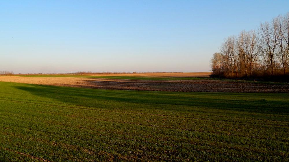 in the field by Nenad Milic