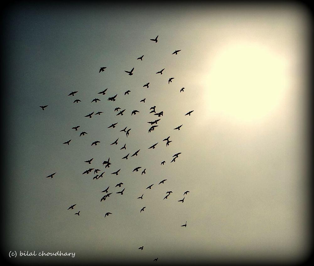DSC01982 by Bilal Choudhary