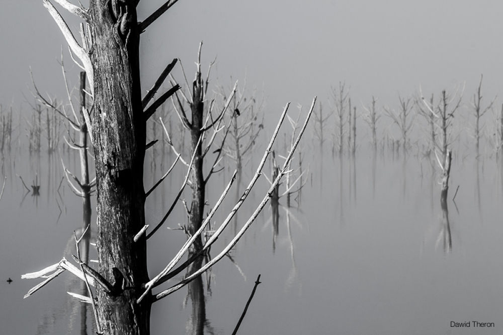 THEEWATERSKLOOF DEAD TREES #6 - (Cat. No. DT2012-1095) by Dawid Theron