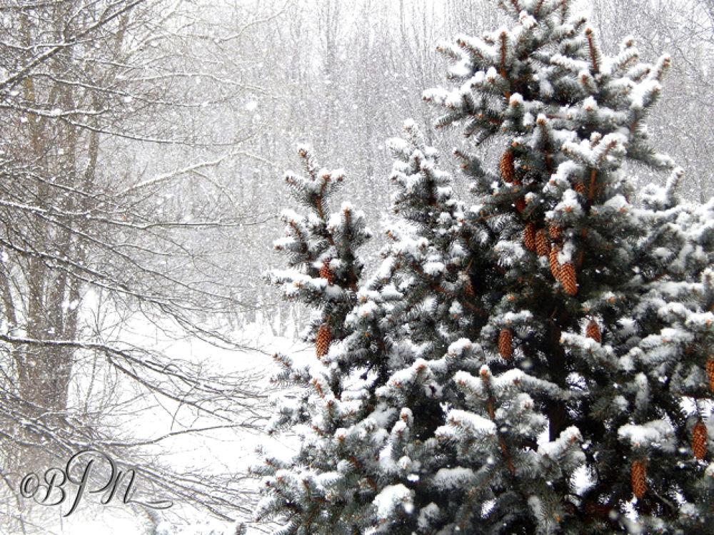 Winter11 by Bryce Nathaniel Desmond