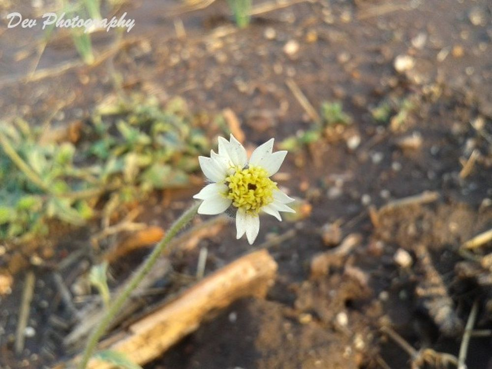 Flower by DevRane