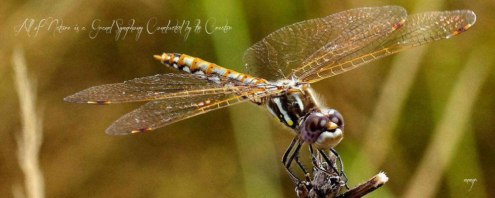 Dragonfly by Marilyn Mock Peterson