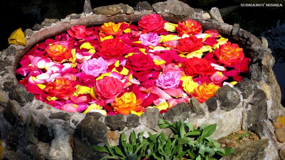 Flowers by subhamoy mishra