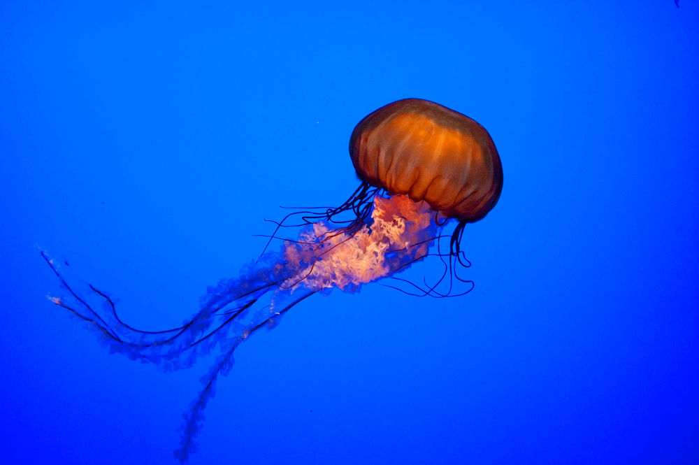 Jelly by KC Becker Photography