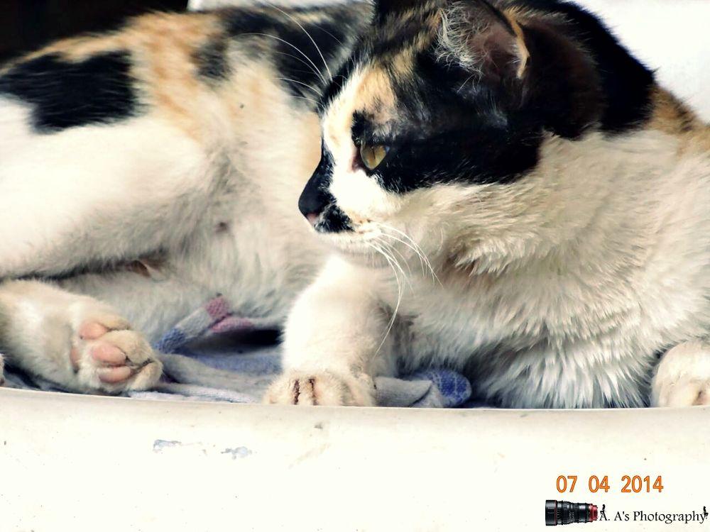 -Cat. <3 by ALi Abbas
